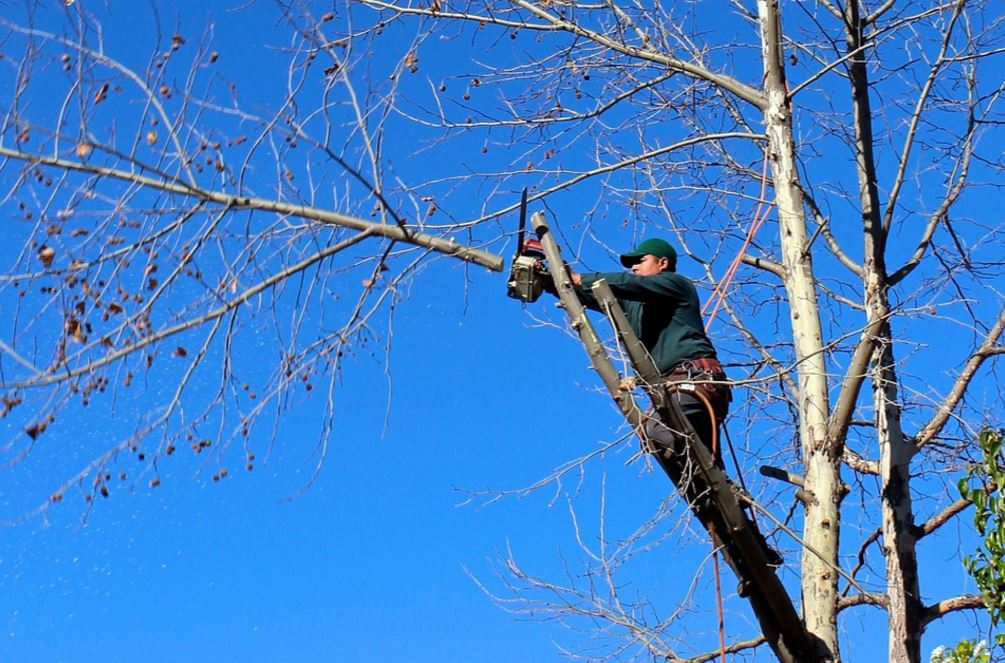 pruning franklin tn