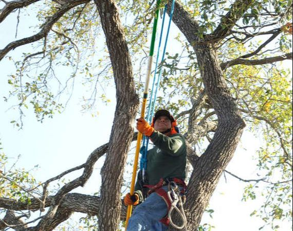 tree trimming work in Brentwood